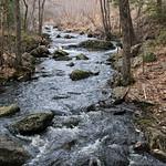 Manchester Cedar Swamp Preserve 42