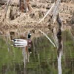 Manchester Cedar Swamp Preserve 64