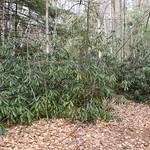 Manchester Cedar Swamp Preserve 44