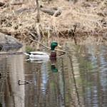 Manchester Cedar Swamp Preserve 45