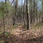 Manchester Cedar Swamp Preserve 23
