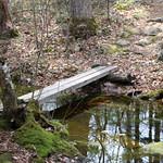 Manchester Cedar Swamp Preserve 18