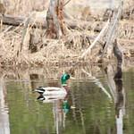 Manchester Cedar Swamp Preserve 68