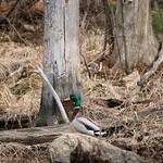 Manchester Cedar Swamp Preserve 50
