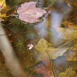 Manchester Cedar Swamp Preserve 29