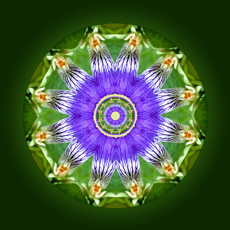 Wild Violet Petal Mandala