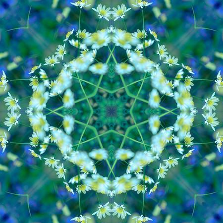 Fairy Garden Daisies
