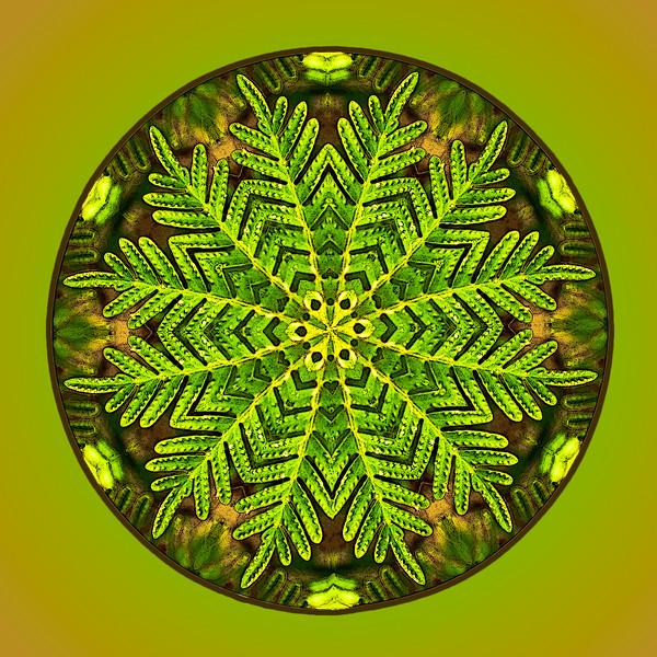 Fern Mandala