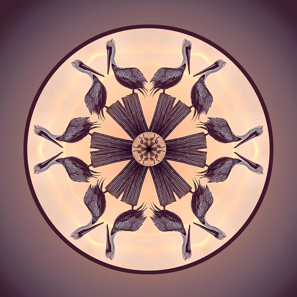 Pelican Mandala