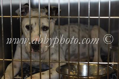 Mandeville Animal Hospital-Rescue Dogs