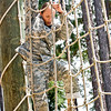 Sgt. 1st Class Vanessa Urban, Massachusettes National Guard climbs a net during the obstacle course at the Best Warrior Competition, Aug. 1, 2012 at the Warrior Training Center, Fort Benning, Ga. Urban was one of seven enlisted soldiers and seven non-commisioned officers that competed in the event. (US Army Photo by Taffy Steinborne-Keller)