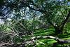 Buckeye Grove, Desert Olive Trail