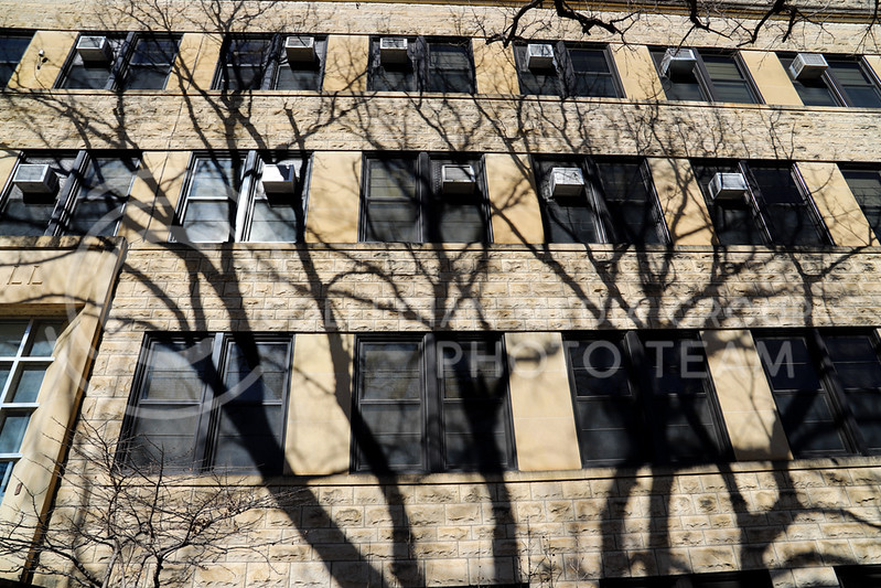 A tree's shadows on Waters Hall. (Monica Melber | Collegian Media Group)