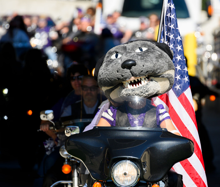 Willie Wildcat  prepares to ride around the KSU stadium for Harley Day, pregame against TCU at Bill Snyder Family Stadium on Oct 19, 2019. The Wildcats defeated the Horned Frogs 24-17. (Dylan Connell | Collegian Media Group)
