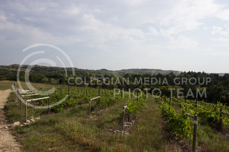 Grape vines grow on a hill at Liquid Art Winery and Estate. (Regan Tokos | Collegian Media Group)
