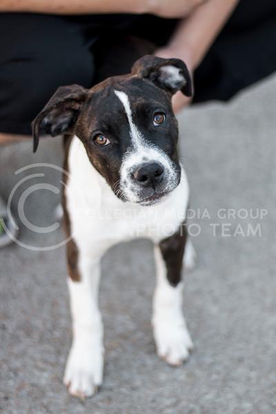Dog (Andrew Kemp | Collegian Media Group)