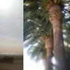 palm, 18x18