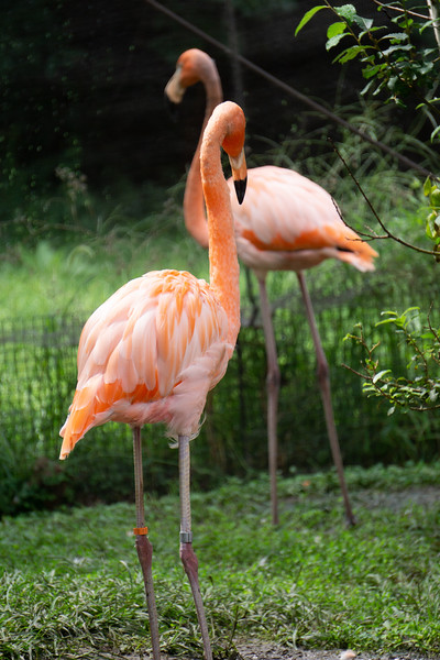 Manhattan Kansas's Sunset Zoo shows more than 200 species of animals. Sunset Zoo has been providing animals for over 70 years. (Abigail Compton| Collegian Media Group)