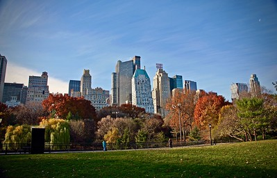 View of the Skyline from Central Park