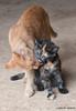 Maniken Sabot Kittens 9-14-7864