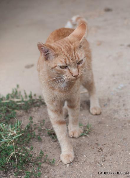 Maniken Sabot Kittens 9-14-7524