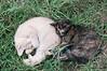 Maniken Sabot Kittens 9-14-7955