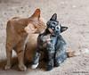 Maniken Sabot Kittens 9-14-7804