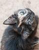 Maniken Sabot Kittens 9-14-7573