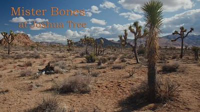 Mister Bones at Joshua Tree
