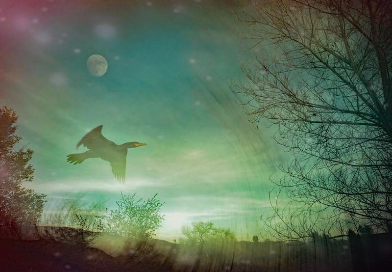 Cormorant's Fantasy