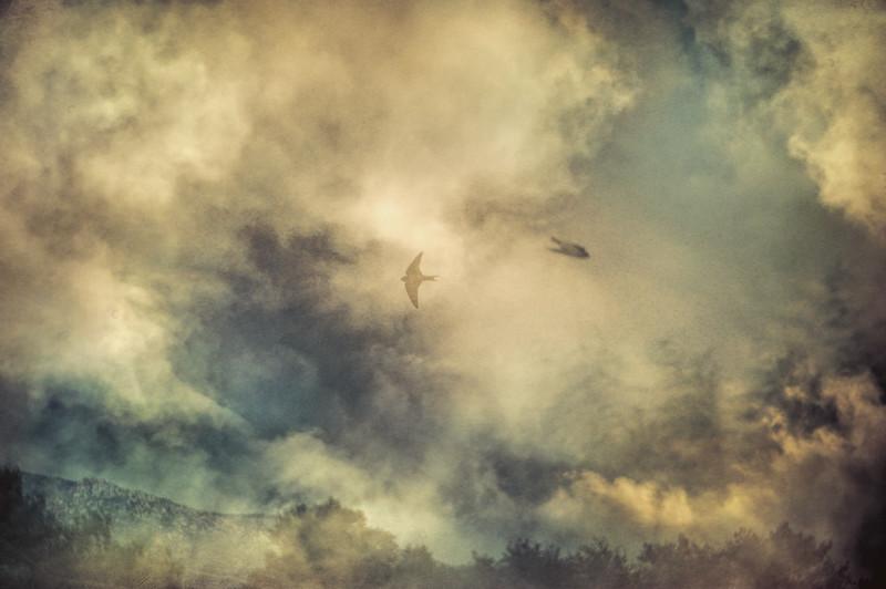 Swallows Aloft