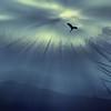 Egret Rising2