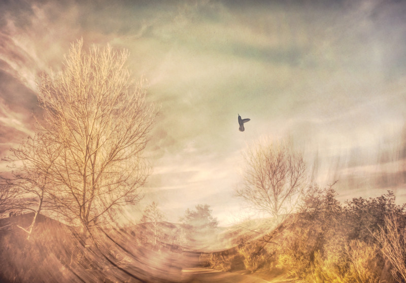 Morning Hummingbird
