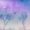 Bat Lavender