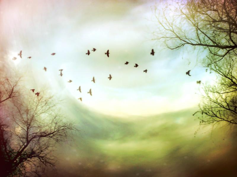 Fairytale Swirl