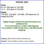 Pricing template Harness Racing