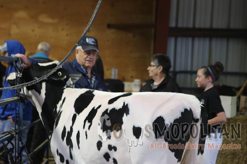 Manitoba Holstein Spring 2015