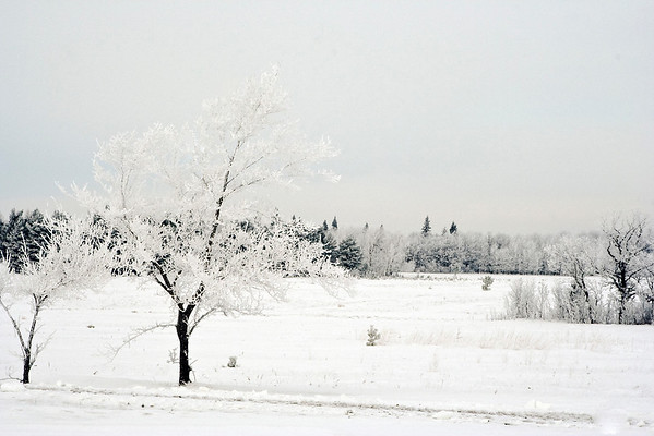 hoar frost birds hill park4