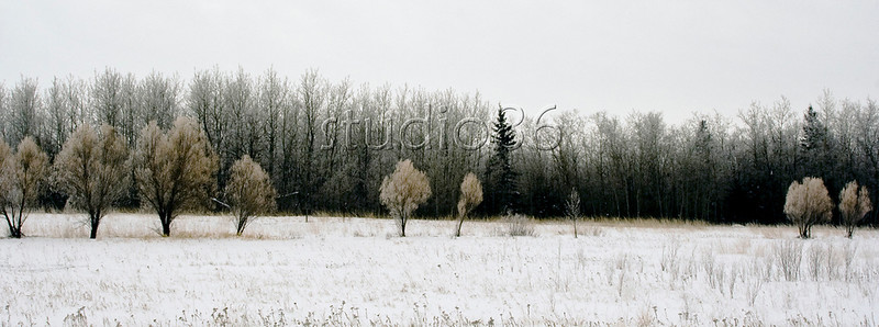 hoar frost birds hill park