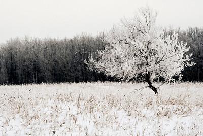 hoar frost birds hill park2
