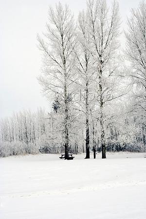 hoar frost birds hill park3