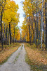 A narrow road with fall foliage color at Buffalo Point, Manitoba, Canada.