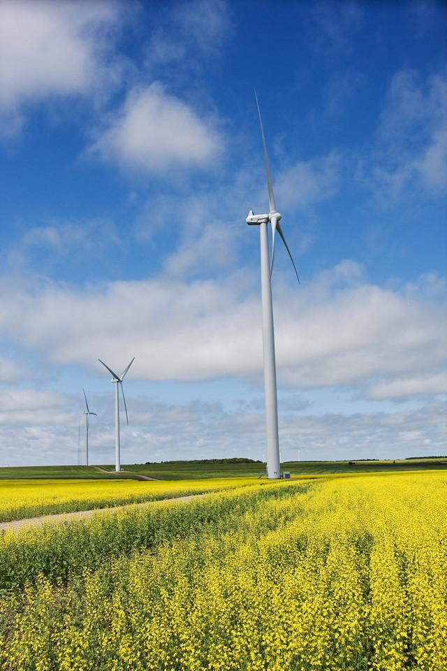 canola, wind turbines, manitoba