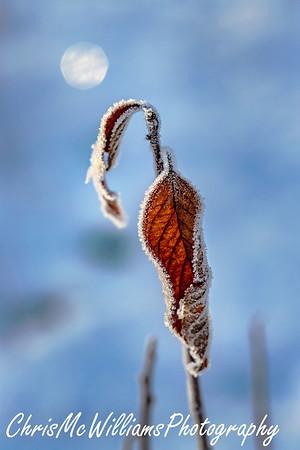 aaa hoar frost mckay 12 20-1