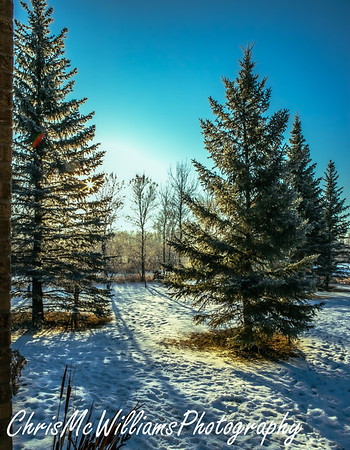 aa hoar frost mckay 12 20-7