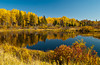 Fall foliage color in the Whiteshell Provincial Park, Manitoba, Canada.