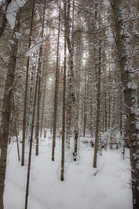vb snow 1 21-16