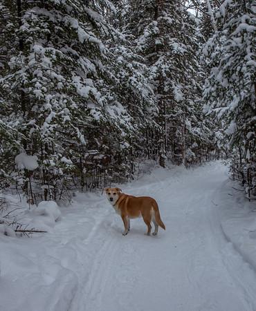 vb snow 1 21-8