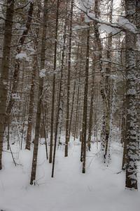 a vb snow 1 21-15