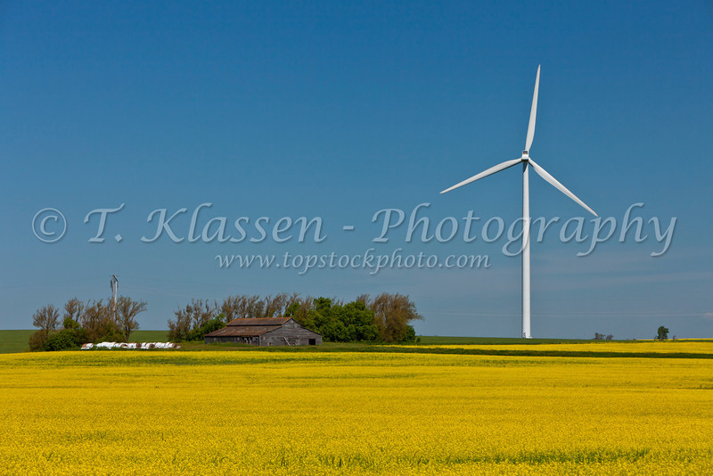 A single windmill and an old barn at an electric windfarm near St. Leon, Manitoba, Canada.